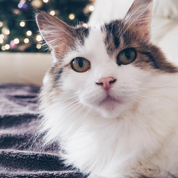 Meet Lou
