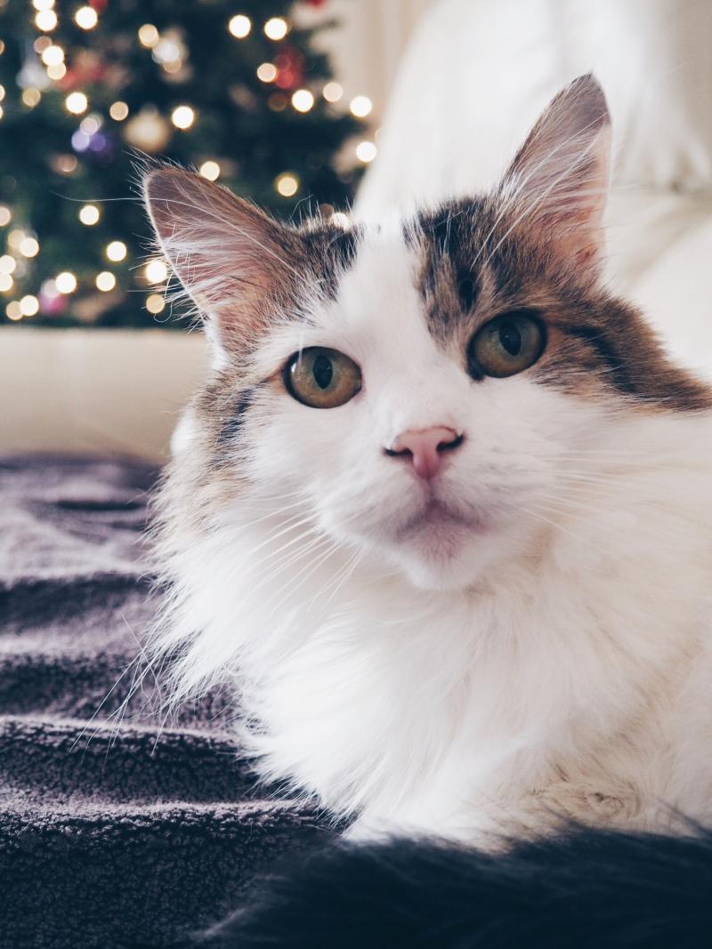 Meet Lou!